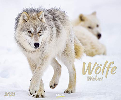 Wölfe 2021: Großer Wandkalender. Foto-Kunstkalender über den Wolf. Querformat 55 x 45,5 cm.