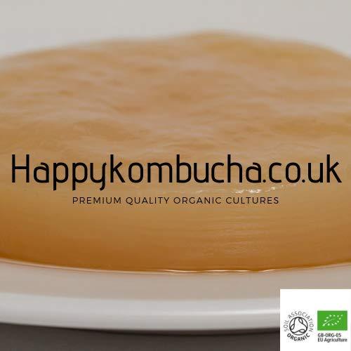 Happy Kombucha - Cultura de kombucha (orgánica, mediana)