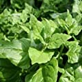 Outsidepride New Zealand Spinach