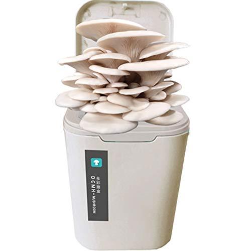Rowe Cultive su Propio Kit de árboles bonsái, Kit de Crecimiento de Hongos mágicos Interior, Bricolaje Oyster Mushroom Spawn Compost, fácil de Crecer, Cosecha en 2-3 semanas (Color : Gray)