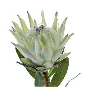 Protea Floral stem. Tropical Silk Flowers Light Green Tint FJM02