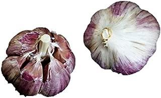 1 +Pound Fresh Krandasger Red Garlic Bulbs - Large - Fresh - Hardneck - Allium sativum ophioscorodon by Growers Solution