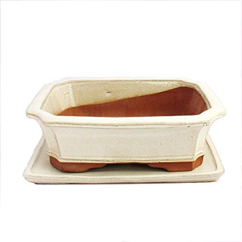 Bonsai Bol avec sous assiette Taille 5 – Beige clair – Rectangulaire – Modèle G4 – L 31 cm – B 23 cm – H 9,5 cm