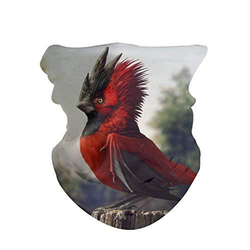 HAOZI Lot de 2 masques 3D pour foulards, bandeaux, cagoule et protection contre le vent, oiseau rouge, 50 CM x 25 CM