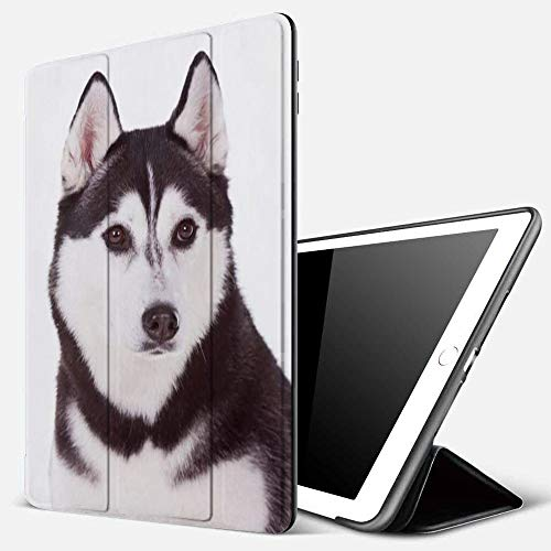 iPad 9.7 inch 2017/2018 Case/iPad Air/Air 2 Cover,Siberian Adorable Isolated Husky Obedience Dog Pet Winter Animals Wildlife,PU Leather Shockproof Shell Stand Smart Cover with Auto Wake