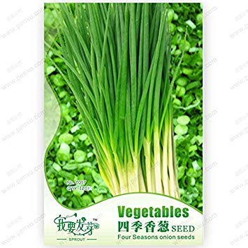 Original Pack 120 Seeds/Pack, Seasons onions,leeks balcony potted plants,bonsai seeds organic vegetables chives