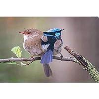 diyの木製フレーム 40x50cm 油絵 数字キットによる絵画 塗り絵 手塗り 動物の鳥- DIY絵 デジタル油絵-40x50cm (diyの木製フレーム)