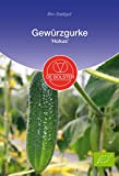 De Bolster Samen knackige Gewürzgurke, robuste und stark wachsende Einlegegurke, 3 Packungen Bio-Saatgut