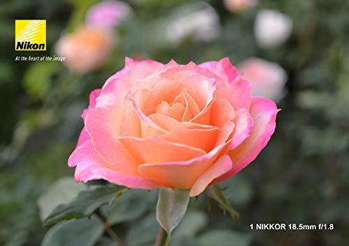 『Nikon 単焦点レンズ 1 NIKKOR 18.5mm f/1.8 シルバー ニコンCXフォーマット専用』の2枚目の画像