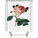 changchuan Rosa Centifolia Redoute Flower Jeffcybs Fabric Shower Curtain,091388, 66x72 Inch