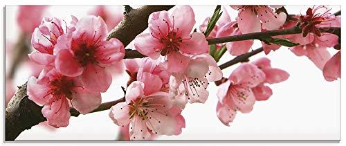 Artland Glasbilder Wandbild Glas Bild einteilig 125x50 cm Querformat Natur Blumen Blüten Kirschblüten Baum Frühling T5PL