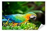Postereck 3243 - Poster & Leinwand, Papagei Ara Vogel Natur