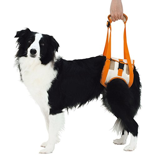 Alfie Pet - Kris Support & Rehabilitation Lifting Harness - Style: Rear, Size: XXL