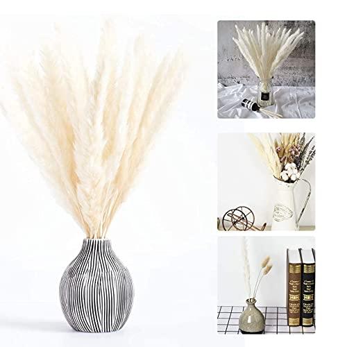 Grass secas para la decoración del hogar,Hierba de Pampas,Pampas Grass,Hierba de Pampa pequeña Seca,Pampas Grass Decoracion (30 Piezas)