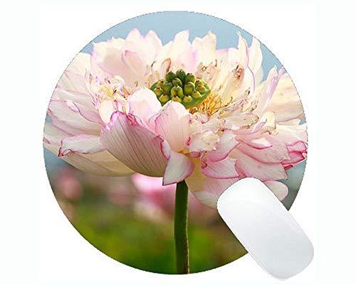 Crema Envejecida CLP Arco Jard/ín Summer en Hierro I Arco de Rosas Estilo R/ústico I Arco de Pie para Enredaderas I Soporte para Enredaderas I Color