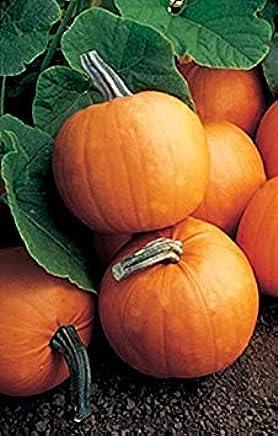 GEOPONICS Pumpn Orange ie Vegetable Seeds