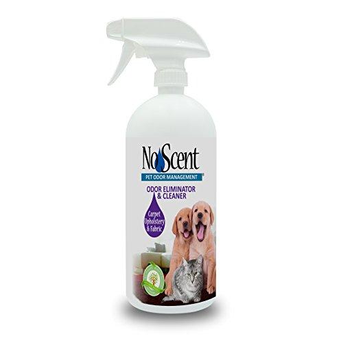 No Scent Carpet Upholstery & Fabric - Professional Pet Urine Feces Odor Eliminator & Cleaner - Safe All Natural Probiotic & Enzyme Formula Smell Remover for Furniture Mattress Rug Clothes (32 oz)