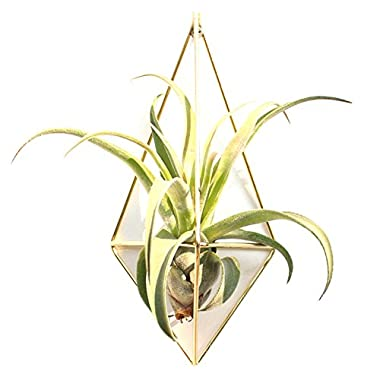 Sundlight 2 Pack Hanging Planter Geometric Wall Decor Container - Great For Succulent Plants, Air Plant, Mini Cactus, Faux Plants and More, White Ceramic/Brass
