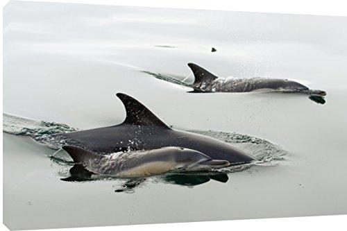 MOOL - Stampa artistica da parete su una cornice in legno con finitura in vernice impermeabile, pronta da appendere, motivo: delfini, dimensioni: 90 x 50 cm
