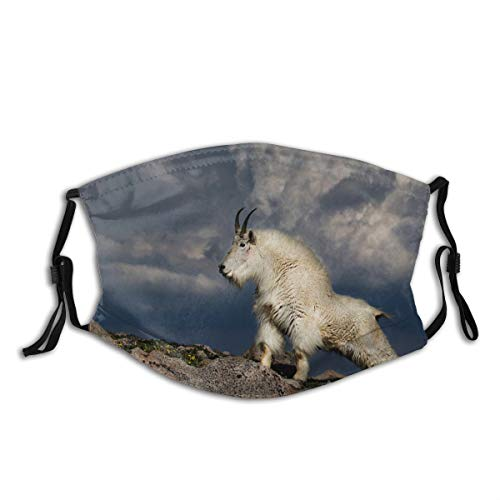 FOURFOOL Face Cover Nature Animal Wild Wildlife Goat Mountain Rock Balaclava Unisex Reusable Windproof Anti-Dust Mouth Bandanas Outdoor Camping Motorcycle Running Neck Gaiter with 2 Filters