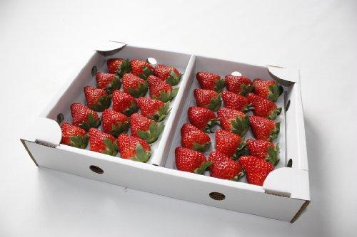 恋い味、紅ほっぺ。 静波レッド  大粒30個入り 静岡県産イチゴ