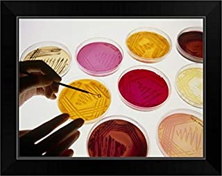 CANVAS ON DEMAND Petri Dish Bacterial Cultures, Picking a Colony Black Framed Art Print, 19