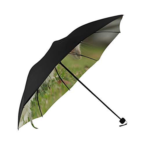 El mejor paraguas Conejo Conejo Holland Lop Parte inferior Impresión Patio Paragüero Negro Paraguas de viaje con 95 Uv Protección...