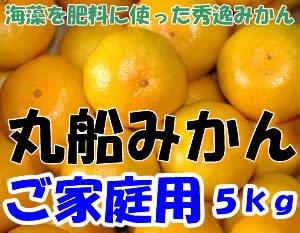 訳あり 和歌山県有田産 丸船みかん S〜2Lサイズ 5kg 30〜60個入 有田みかん