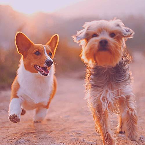 Echt (Hunde Trainieren)