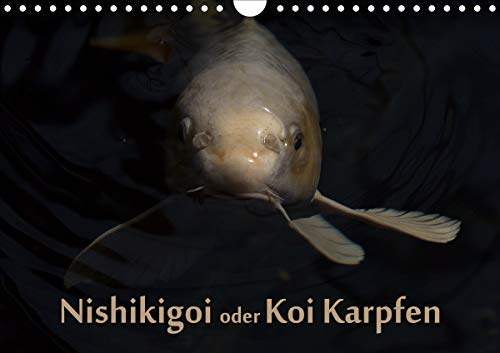 Nishikigoi oder Koi Karpfen (Wandkalender 2021 DIN A4 quer)