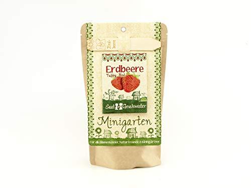Die Stadtgärtner Minigarten Erdbeere
