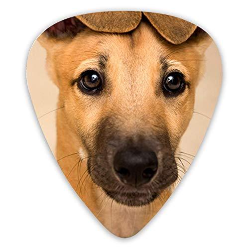 Púas de guitarra para perros Greyhound, púas de guitarra de 12 piezas para guitarra eléctrica y bajos, diferentes tamaños contienen fino, medio, grueso