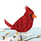 Lovepop Cardinal Pop Up Card, 3D Card, Birthday Card, Sympathy Card, Animal Card, Bird Card