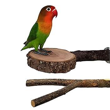 Nynelly 2 PCS perchoirs en Bois Naturel pour Perroquet, perchoirs interactifs pour Cage à Oiseaux, Jouets pour Oiseaux pour Perroquet, Perruche, Parakeet