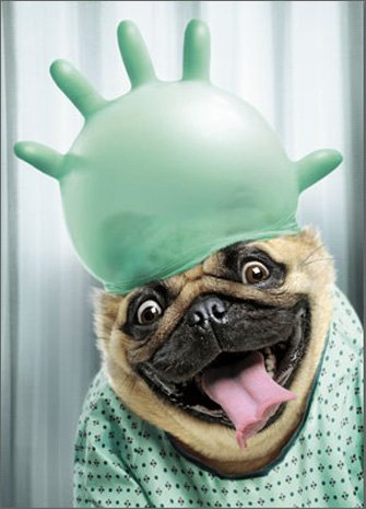 Dog With Surgical Glove Funny Pug Get Well Card