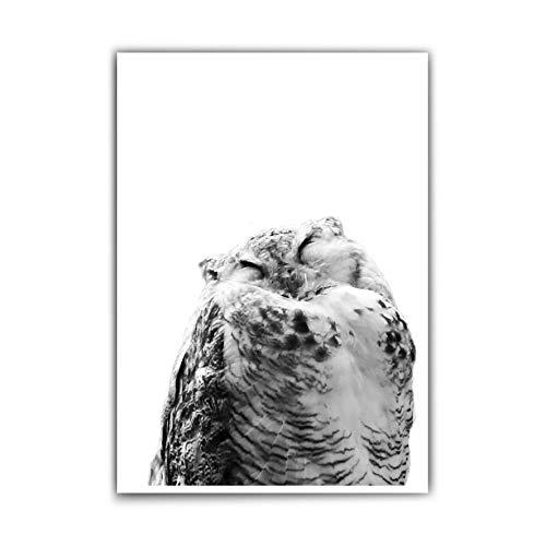 Eulen Poster Schlafzimmer – Poster din a4 – Süßes Tier Bild– Schlafende süße Eule - Bild Eule - Poster Kinderzimmer - schwarz weiß Poster - ohne Rahmen