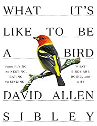Image: What It's Like to Be a Bird: From Flying to Nesting, Eating to Singing - What Birds Are Doing, and Why (Sibley Guides) | Hardcover: 240 pages | by David Allen Sibley (Author). Publisher: Knopf (April 14, 2020)