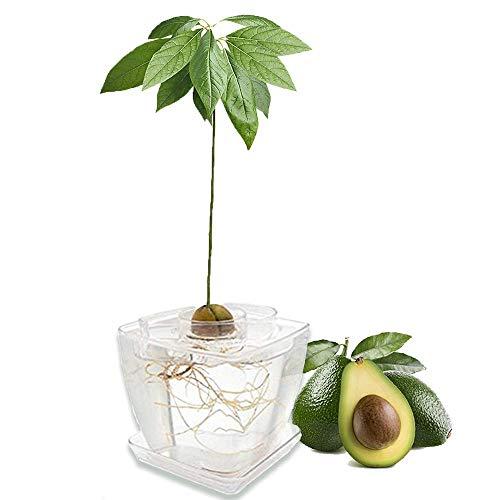 Unique Grow Your Own Avocado