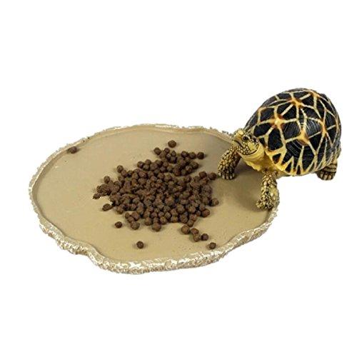 UEETEK Haustiere Fütterung Platte Reptil Fütterung Schüssel Vivarium Lebensmittel Wasser Dish Harz Schüssel für Schildkröte Gecko Schlange Haustier Zucht Tray
