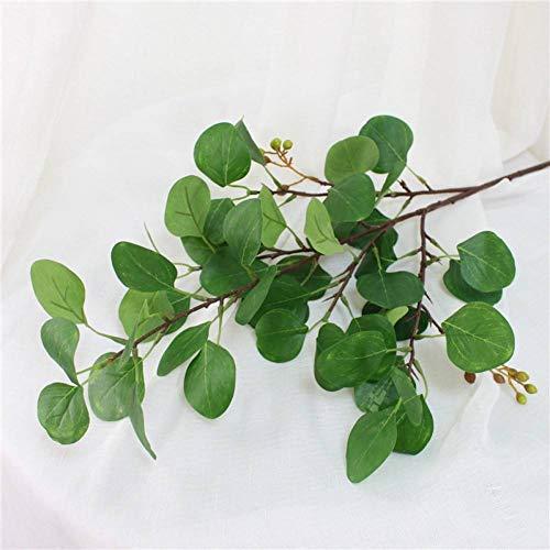 eukalyptus frucht