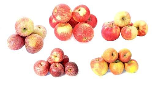 Frische Äpfel vom Bodensee Apfelmix Probierpaket verschiedene Apfelsorten zum probieren Speiseapfel 5 KG