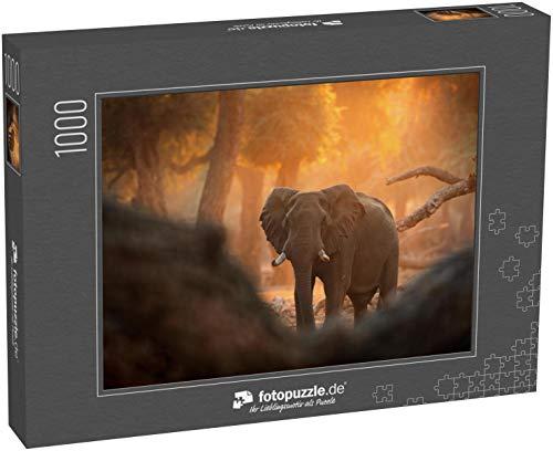 fotopuzzle.de Puzzle 1000 Teile Elefant im Mana Pools NP, Simbabwe in Afrika Großes Tier im Alten Wald, Abendlicht, Sonnenuntergang