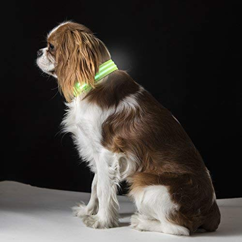 Besser Products Dual LED Dog Collar