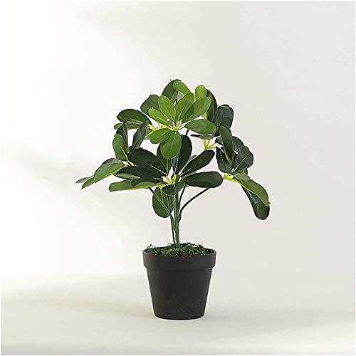 vijgenplant lidl
