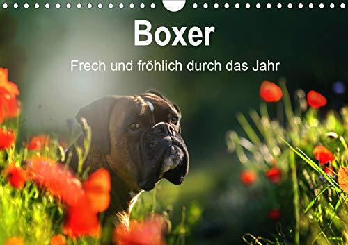 Boxer Frech und fröhlich durch das Jahr (Wandkalender 2021 DIN A4 quer)