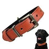 beanspet 犬 ベーシック 首輪 犬首輪 革 おしゃれ かわいい 本革 犬の首輪 いぬ くびわ 犬用品 (XS, オレンジ)