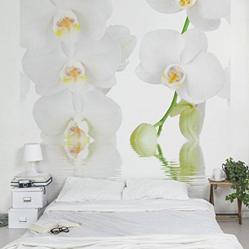 Apalis Fototapete Orchidee in Weiß - Vliestapete - Wellness Orchidee - Blumentapete Quadrat | Vlies Tapete Wandtapete Wandbild Foto 3D Fototapete für Schlafzimmer Wohnzimmer Küche | Größe HxB:240x240cm