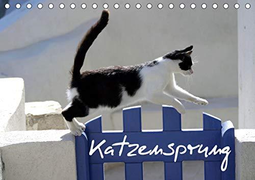 Katzensprung (Tischkalender 2021 DIN A5 quer)