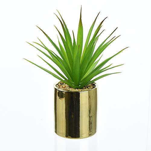 Candlelight Aloe Vera - Maceta suculenta, Color Verde y Dorado