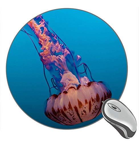 Quallen Monterey Bay Aquarium Kalifornien USA 13141 Hintergrund Desktop Gummi Rutschfest Gaming Runde Mauspad Mausmatte Mousepad